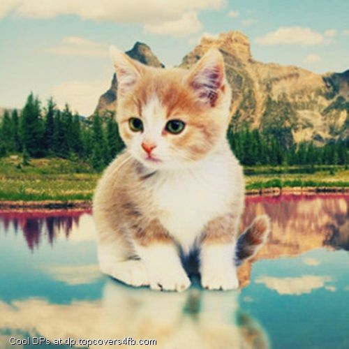 A Collection Of Most Beautiful Cool Stylish And Awesome Profile Pictures Ever We Have Nice Variety Of Facebook Profile Pictu Cat Painting Cute Cats Cute Cat
