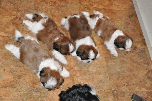 Babies were born 3 years ago today!  (March 20, 2009)