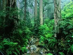 Image result for images of the amazon rainforest