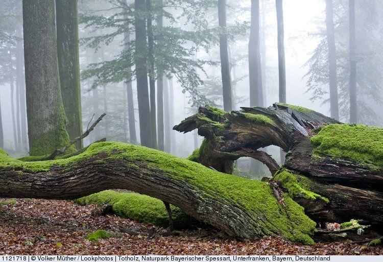 Totholz Naturpark Bayerischer Spessart Unterfranken Bayern Deutschland Bilder Natur Landschaftskunst