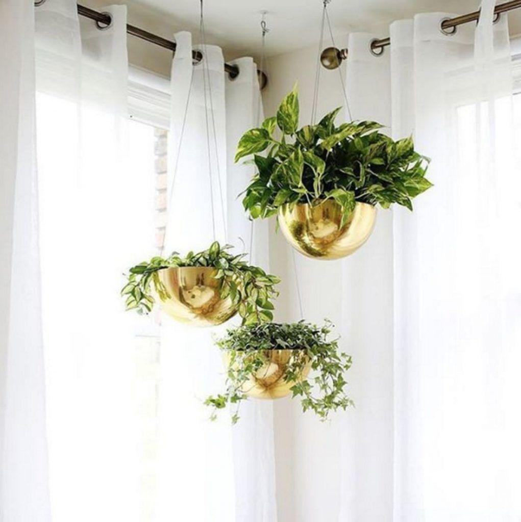 ingenious tropical foliage house plants. Bedrooms metallic hanging planters  House plants Pinterest Planters