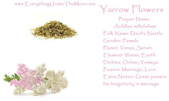 Yarrow Flowers Yarrow Flower Magical Herbs Witchcraft Love Spells