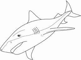 Shark Drawings Google Search Shark Drawing Shark Coloring