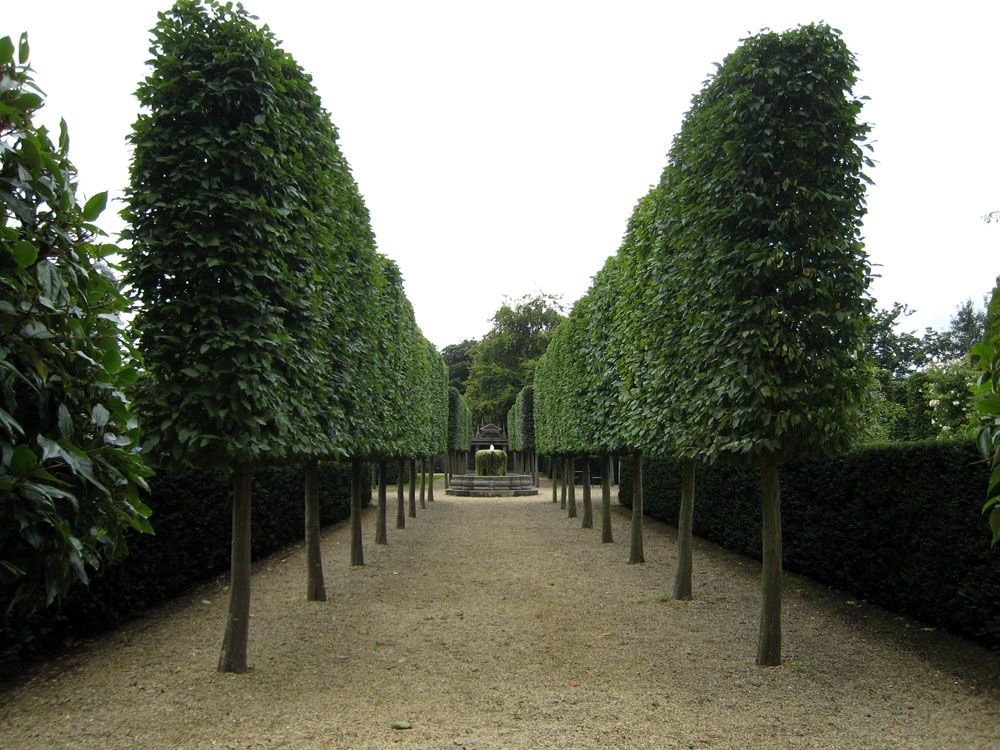 Garden Design Hedges google image result for http://www.architecturalplants/pix