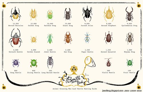Beetle Hunting Guide