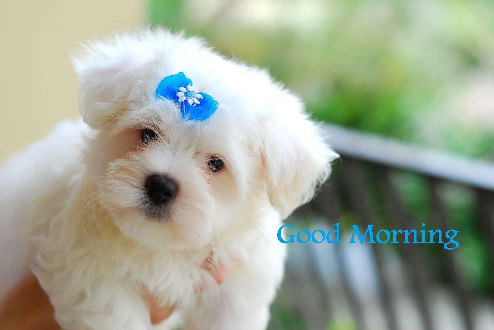 Excellent Good Morning Sms Fantastic Good Morning Sms For Girl