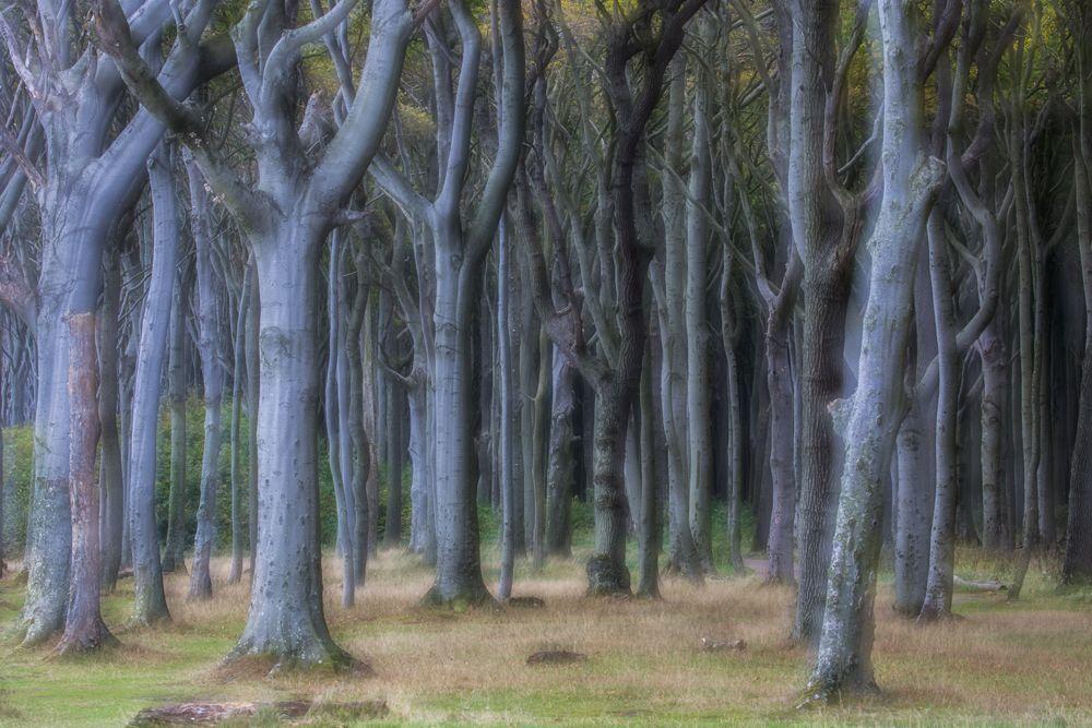 El bosque, Nienhagen