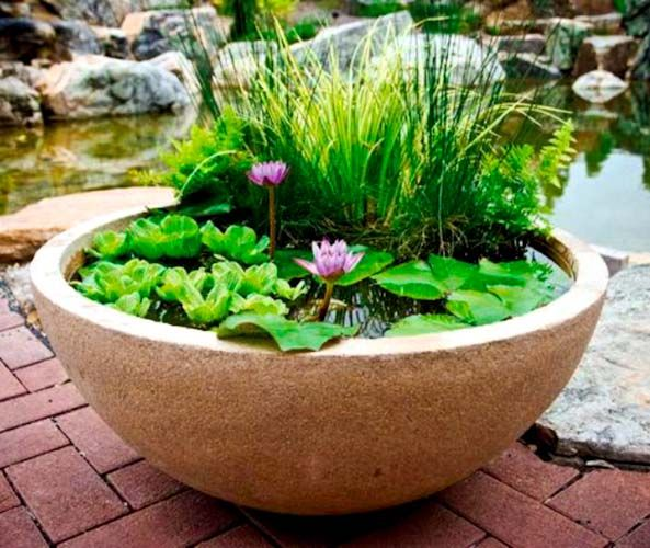 Pond in a pot create a container water garden container for Small container garden ideas