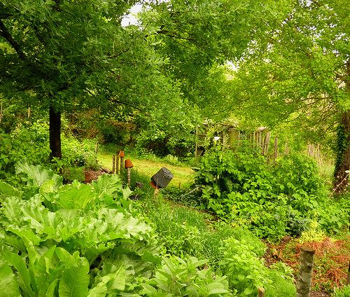 Raspberries, Rhubarb, Horseradish, Sage, mint - they love the wet weather | by hardworkinghippy