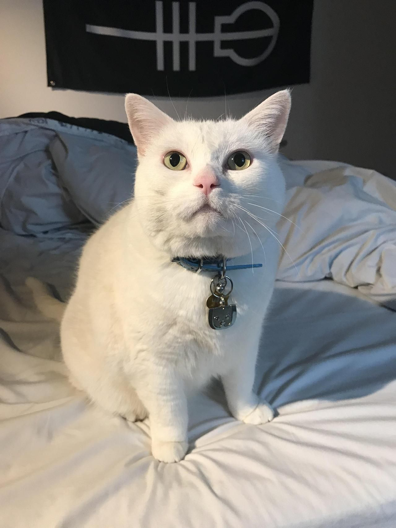 Its This Regal Ladys Birthday Today Shes 5 By Theokayestchef Cats Kitten Catsonweb Cute Adorable Funny Sleepy Anima Funny Cat Pictures Cute Cats I Love Cats