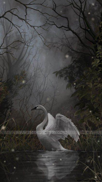 4-wings-in-repose
