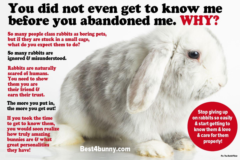 Rabbit Care Advice Rabbit Care Rabbit Pet Rabbit Care