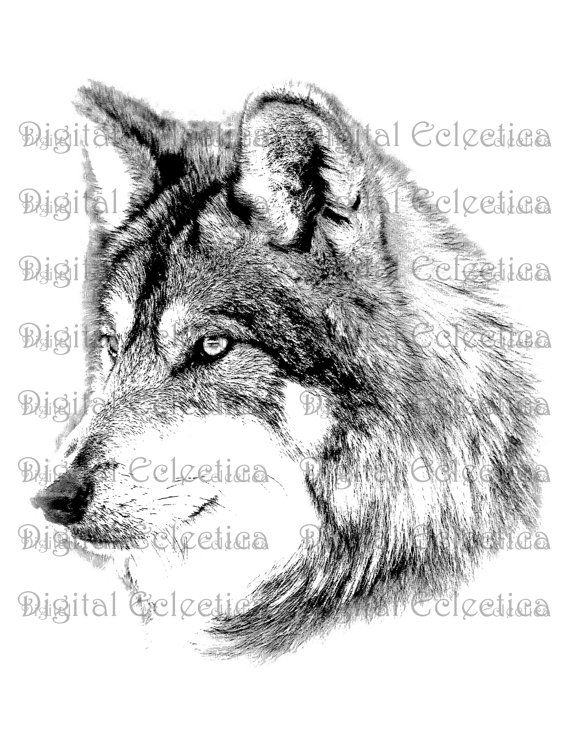 Wolf Face Wolf Png Animal Png Wolf Prints Wolf Image Etsy Wolf Face Wolf Images Wolf Pictures