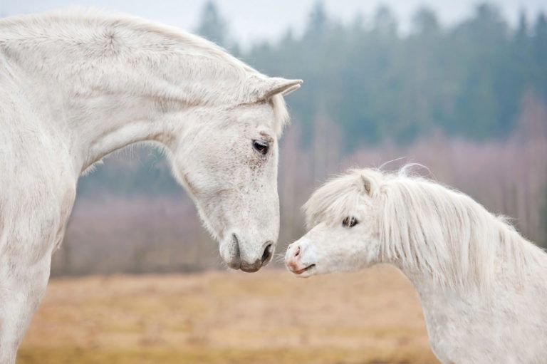 Wenn Du Das Vertrauen Eines Pferdes Gewonnen Hast Hast Du Einen Freund Furs Leben Gewonnen Schone Pferde Fakten Uber Pferde Pferde