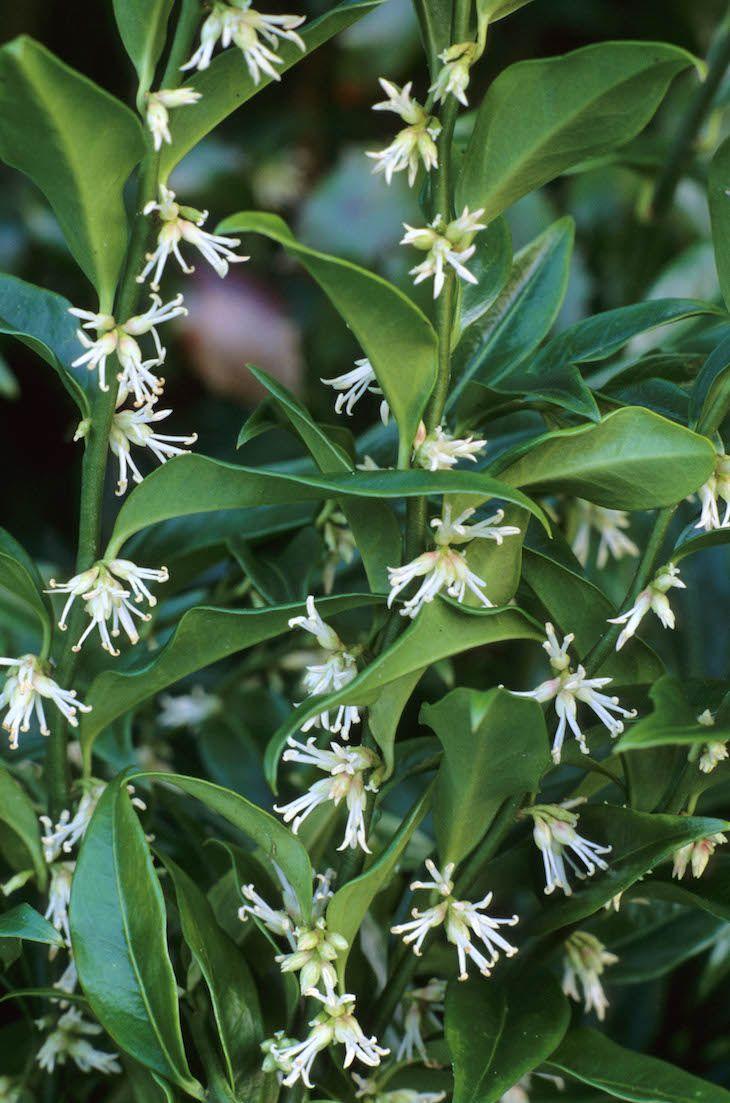 TOP 10 Winter Plants To Brighten Up Your Balcony | Winter plants ...