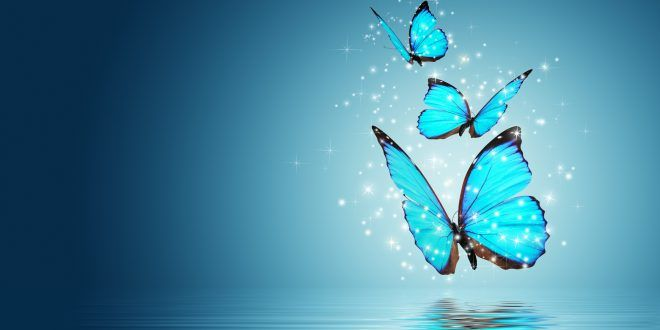 Wallpaper For Pc Full Screen Free Download Blue Butterfly