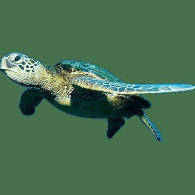 Pin By Ibrahim Saamih On Hgff Turtle Sea Turtle Animals