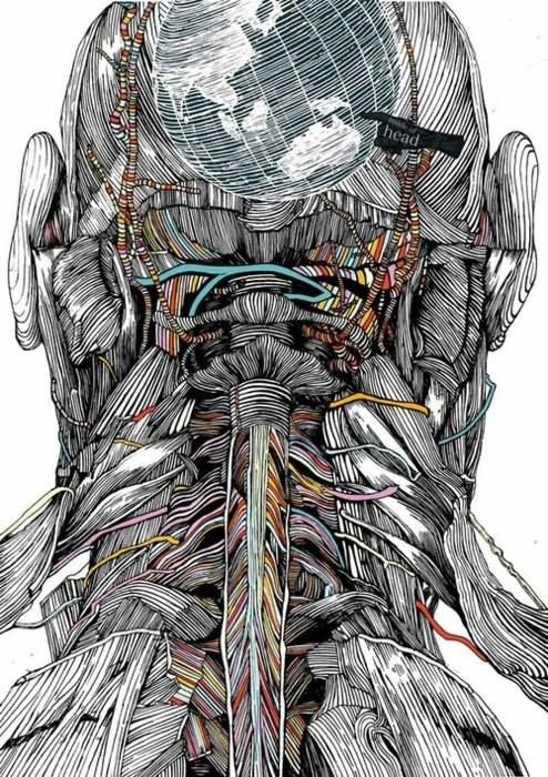 What Are Cervical Nerves? via Anatomy in Motion http://www.wisegeek ...