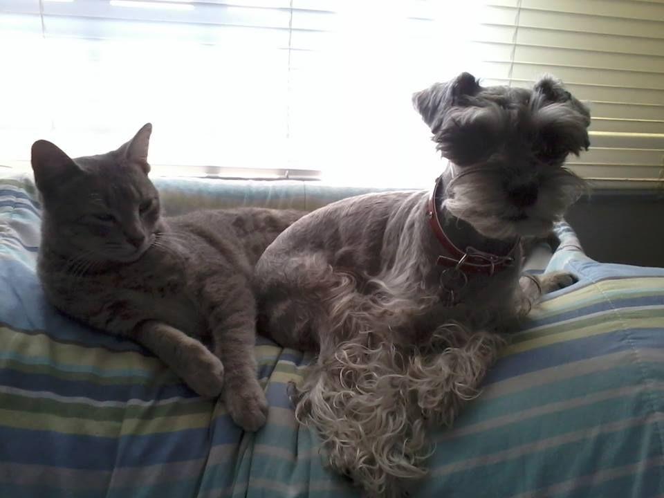 Muñeca y Laika