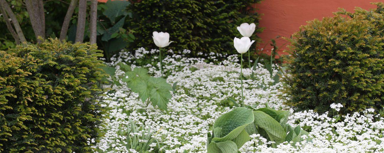 indigagärten | ihre gartengestalter in bünde, münster und, Garten ideen