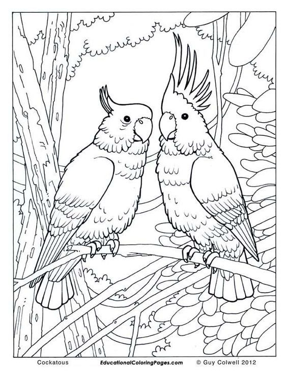 59 Free Jungle Bird Coloring Pages For Adults Cockatoo Coloring Printables Enjoy Coloring Bird Coloring Pages Jungle Coloring Pages Animal Coloring Pages