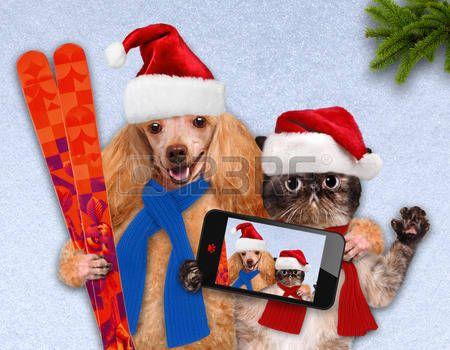 noel chien: Chat et de chien dans rouges chapeaux de Noël prendre un selfie avec un smartphone