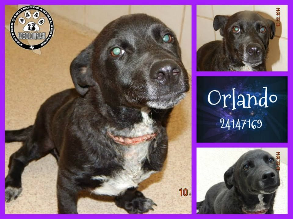 Arlington TX - Final Moments - Consider Fostering to Save
