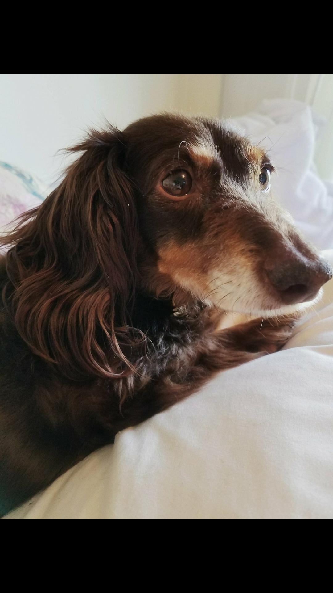 My friends dog is named toot iddkeajkkzsg