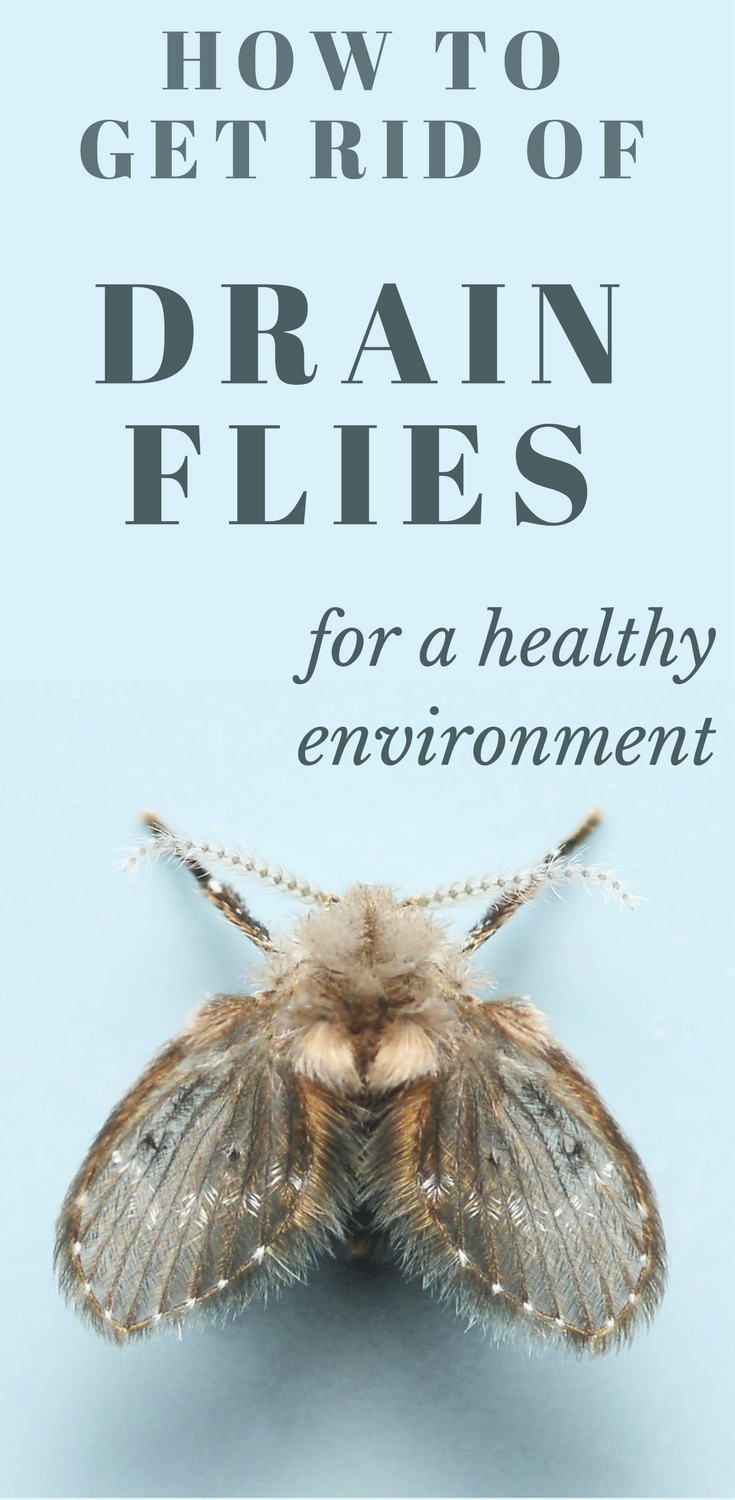 How To Get Rid Of Drain Flies For A Healthy Environment Fly