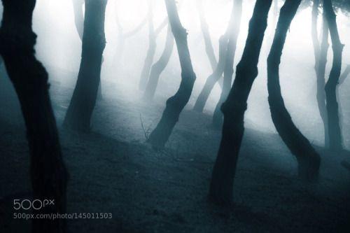 Forest Dawn by rock101  trees fog forest color blue tree korea seoul foggy 6d Forest Dawn rock101