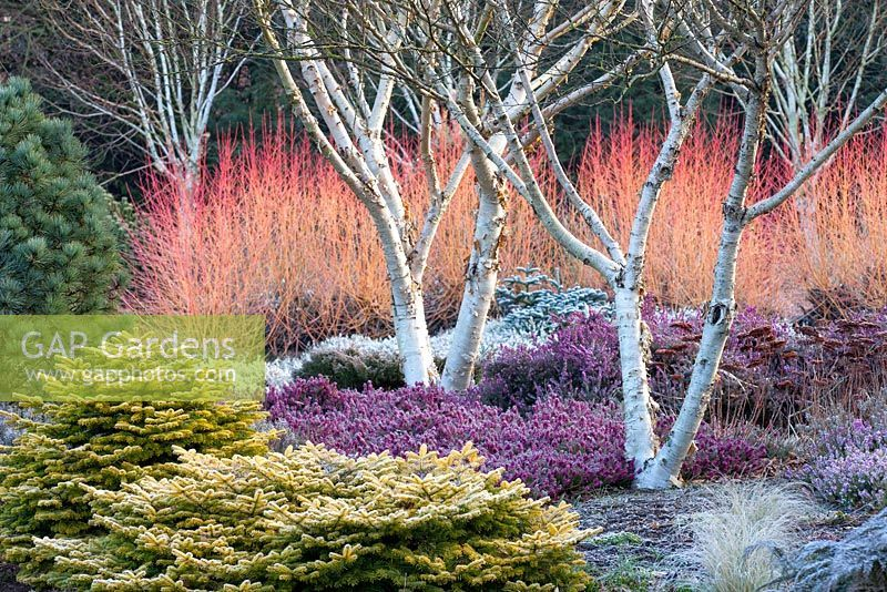 The Winter garden at The Bressingham Gardens, is the inspirational creation of Adrian Bloom.