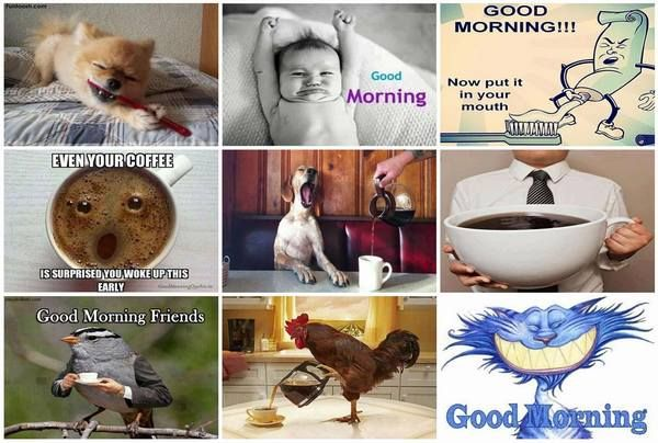 funny-good-morning-pictures-and-images