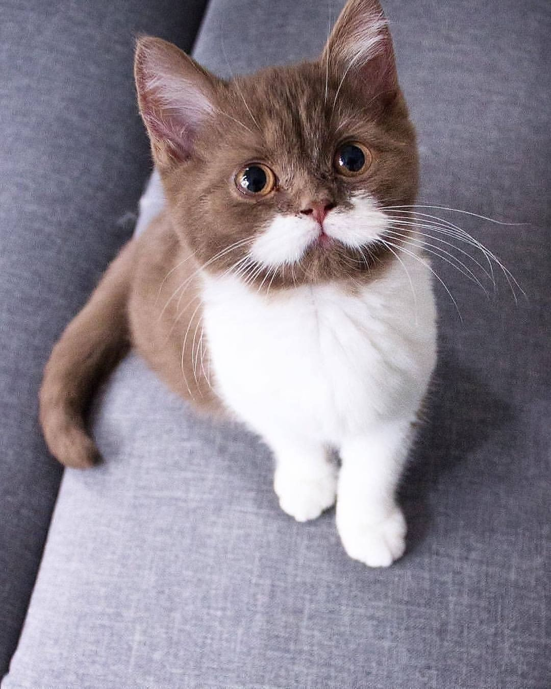 Top 10 Most Beautiful Cat Breeds In The World In 2020 Cute Cats Beautiful Cats Cute Cats Photos