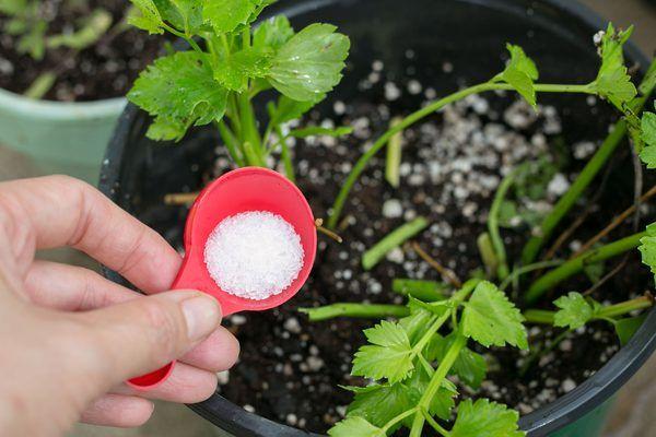 How To Add Epsom Salt Coffee Grounds To Potting Soil Potting
