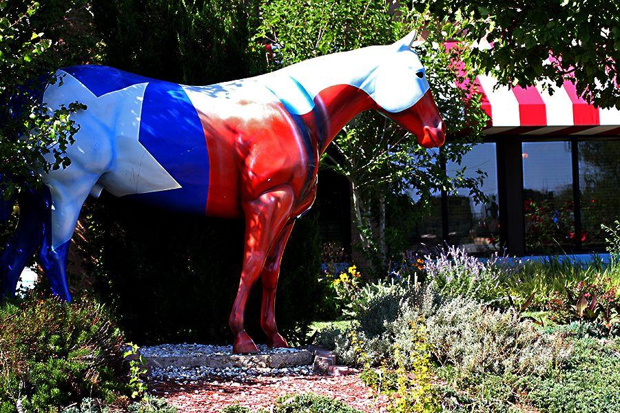 """Texas"". Amarillo, Tx Horses, Amarillo tx, Texas travel"