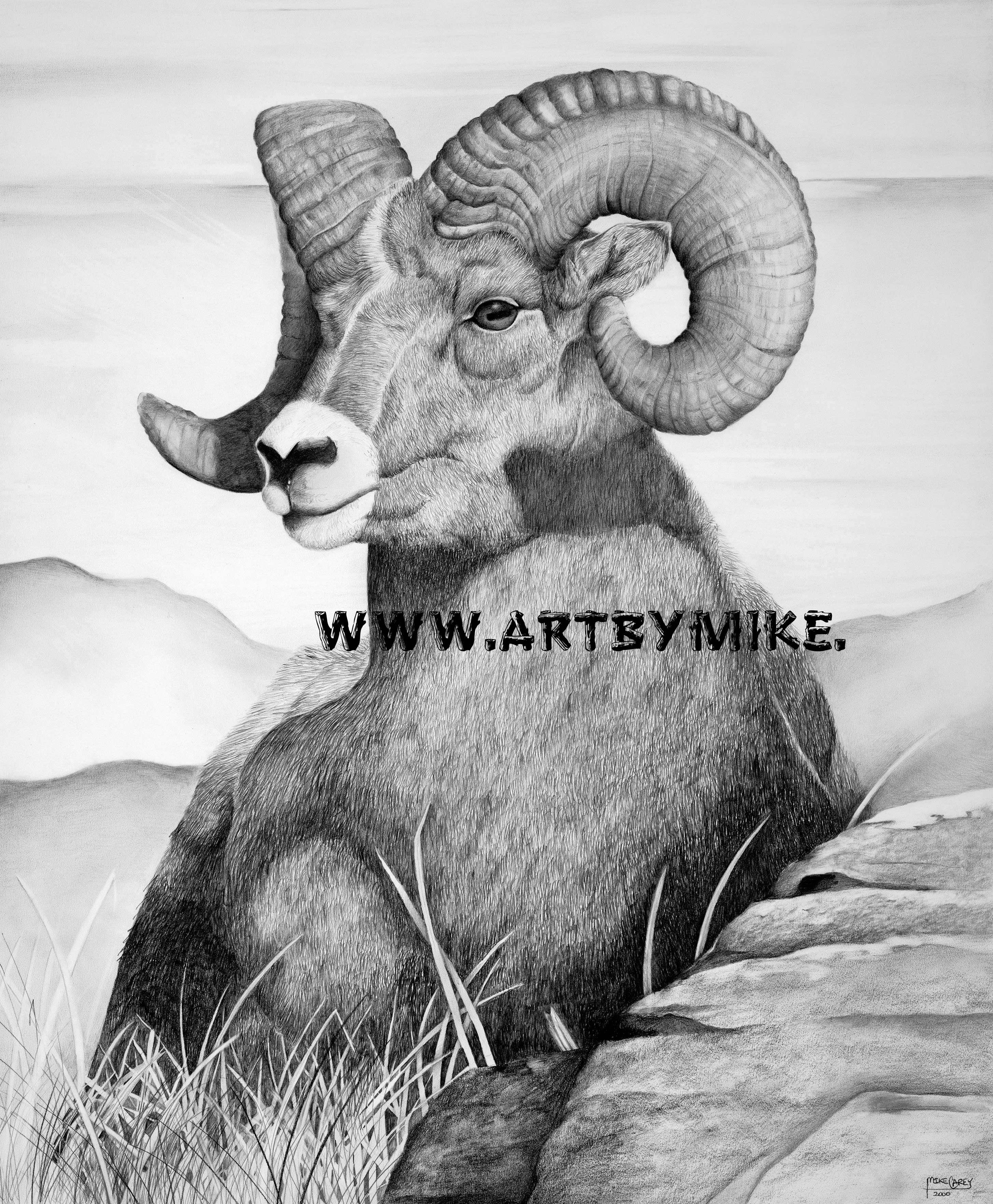 This is an image of Challenger Bighorn Sheep Drawing