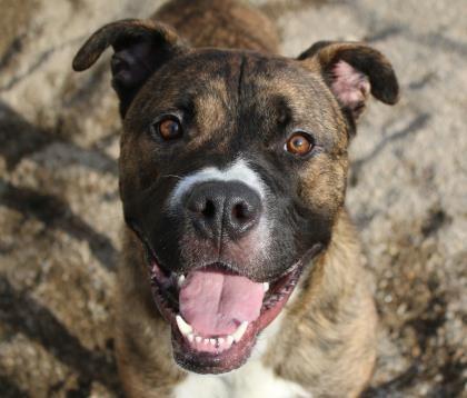 Sunnyvale Texas Animal Control | Rescue | Problems ...