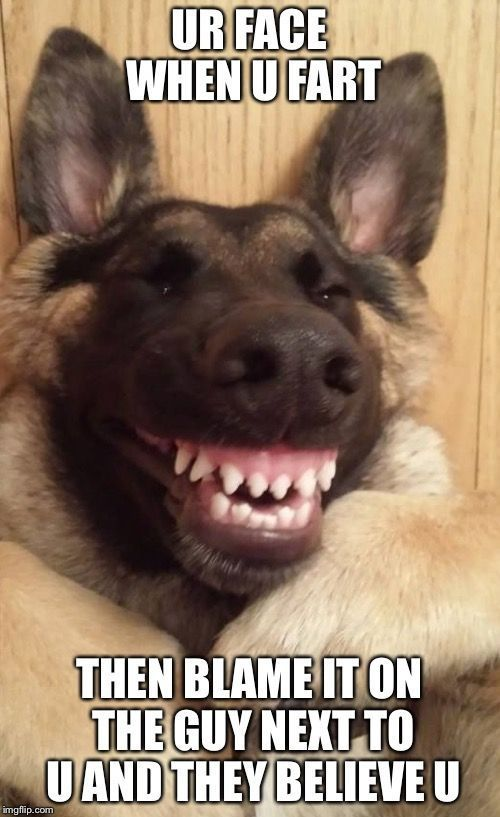 Photo of 21 Hillarious Dogs Meme, die ein Lächeln auf Ihr Gesicht zaubern – TB Prisci