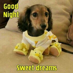 Good Night Humor Pinterest Cute Animals Dogs And Puppies