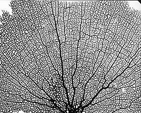 Fan coral interior texture details pinterest fan coral fan coral publicscrutiny Images