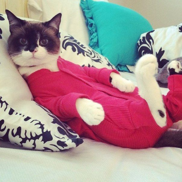 Image result for cats in pajamas