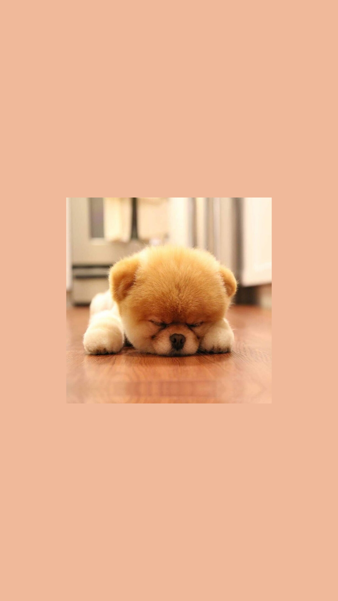I Created This Wallpaper But Credits To The Owner Of The Picture Cute Dog Wallpaper Cute Puppy Wallpaper Cute Baby Animals