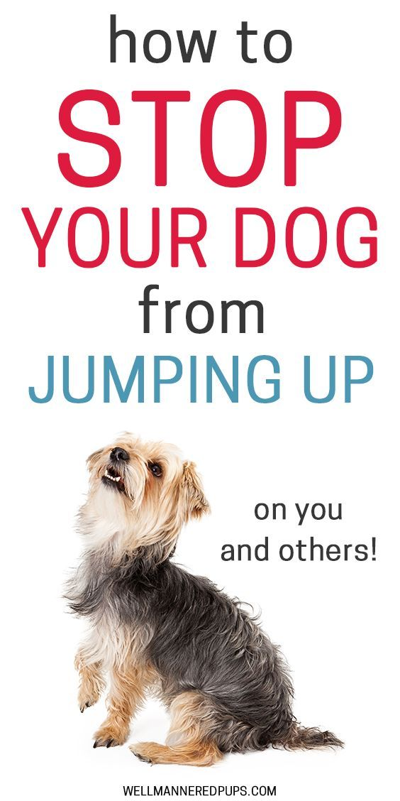 How To Stop Your Dog From Jumping Up On You And Others Dog