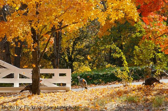 California Fall Colors Cool Places To Visit Places To See Fall Photography Nature
