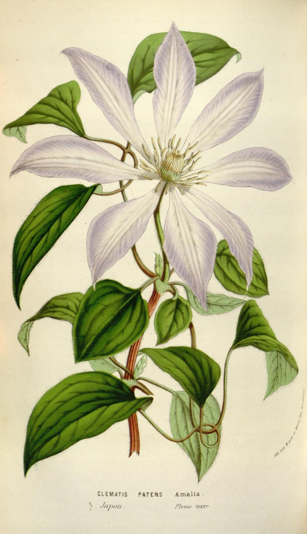 V flore des serres et des jardins de lueurope