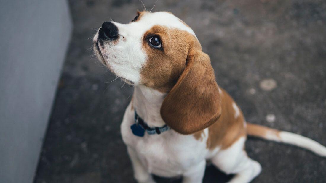 New Zealand To Start Encouraging Adoption Of Former Lab Animals