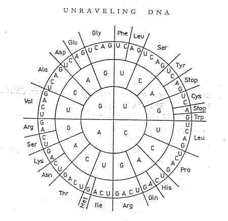 division of astrological circle into 28 parts or sectors of lunar - amino acid chart