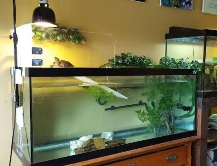 Image Result For Turtle Tank Basking Area Ideas Turtle Habitat