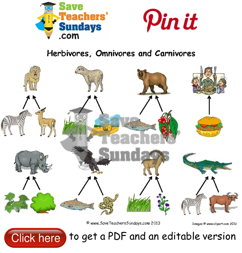 Identify animals as herbivore carnivore or omnivore – Herbivore Carnivore Omnivore Worksheet