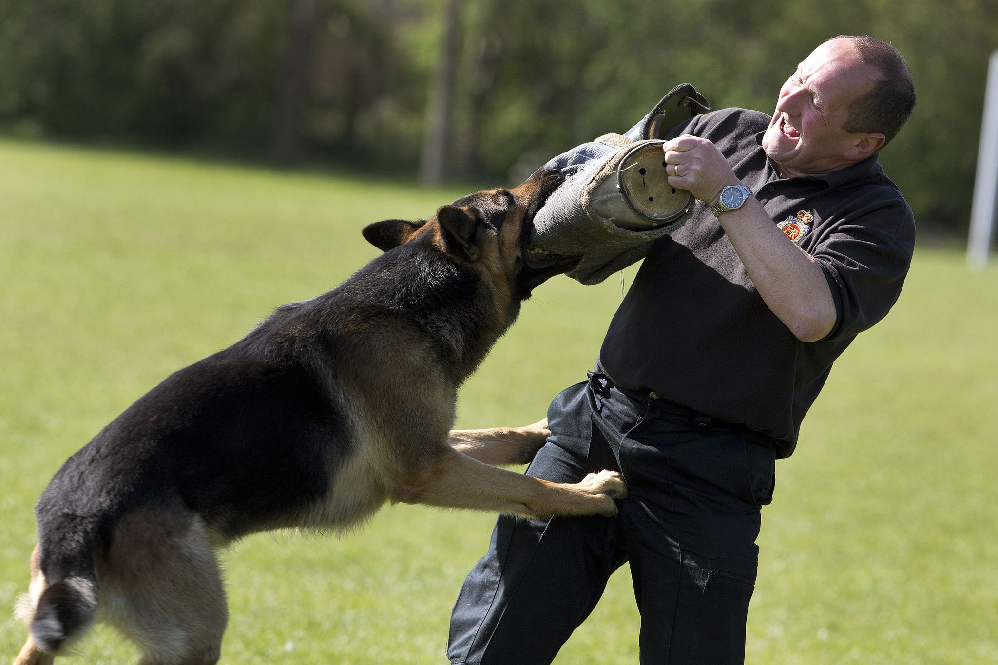 Ouch Police Dogs German Shepherd Training Dog Training